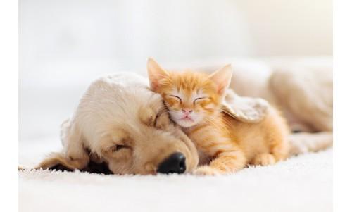 Posesorii de pisici, câini și dificultățile întâmpinate în timpul somnului